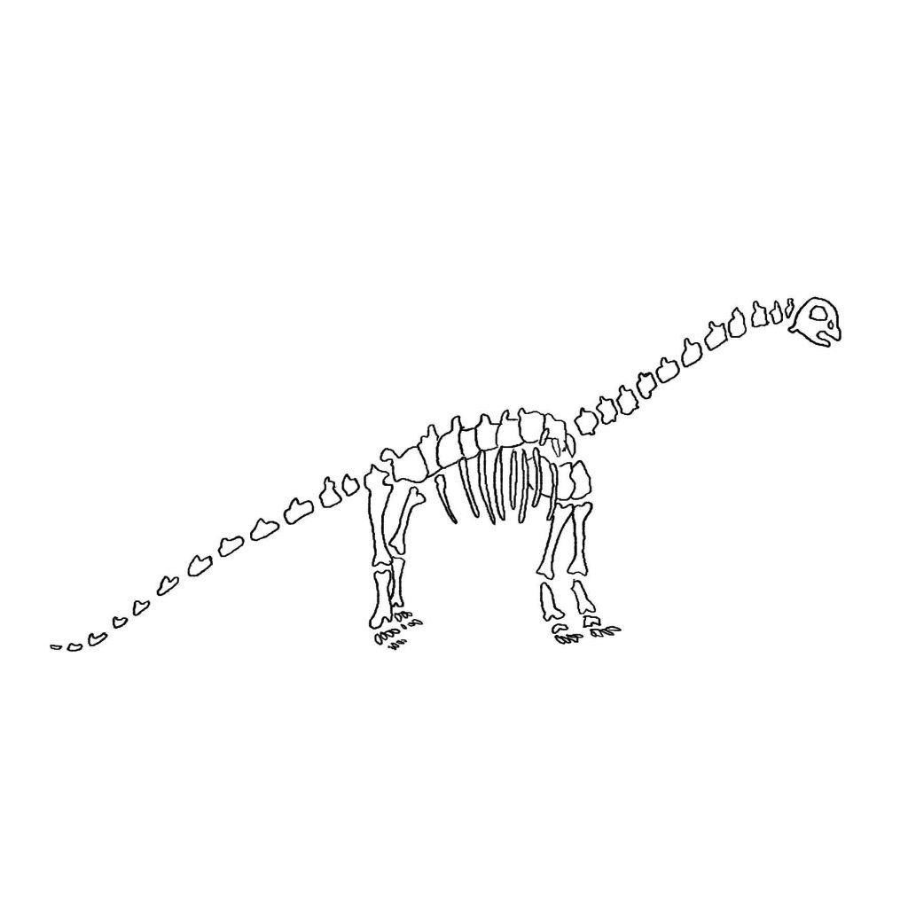 skelett dino