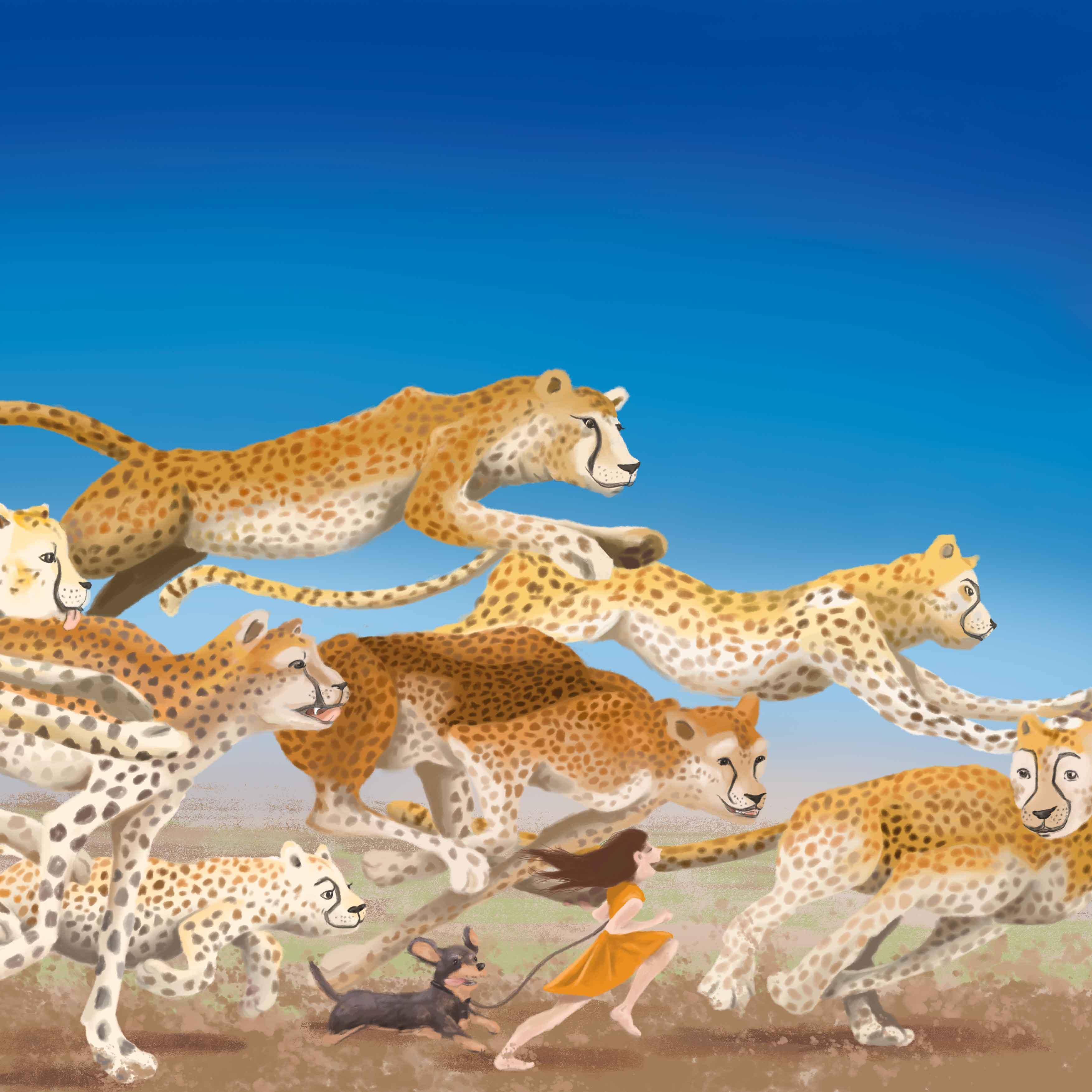 cheetah illumerle