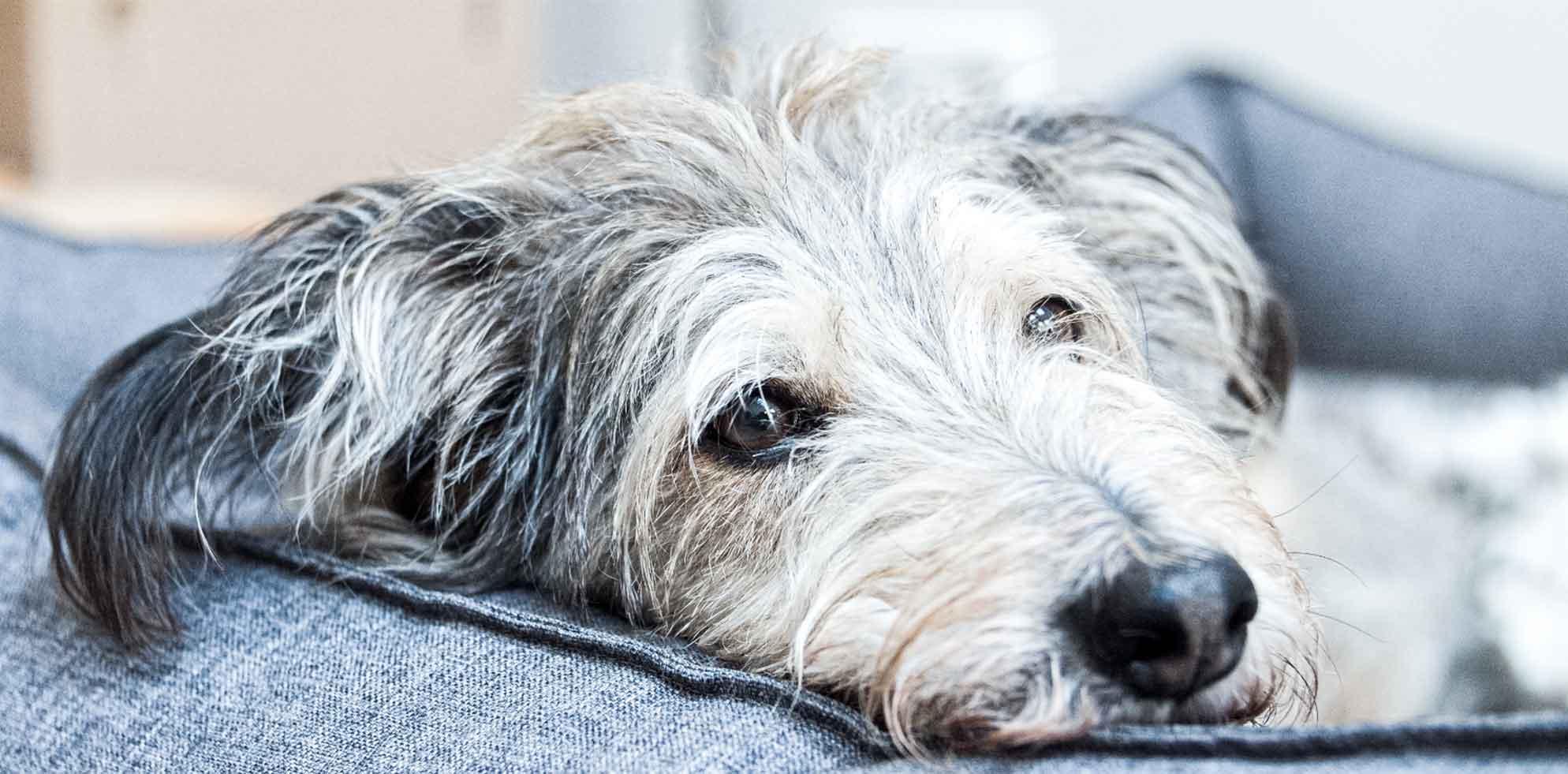 bruno-hund-silke-knörk