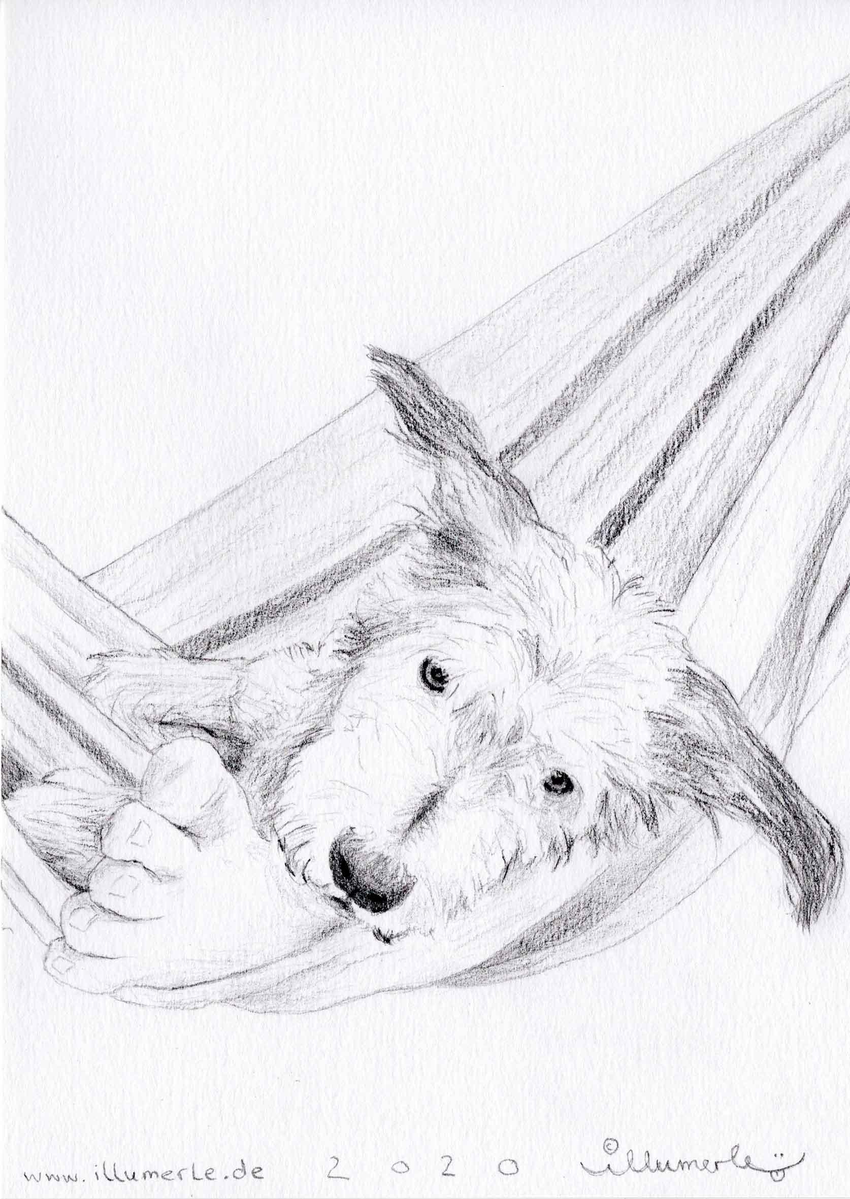 hund-porträt-schattiert