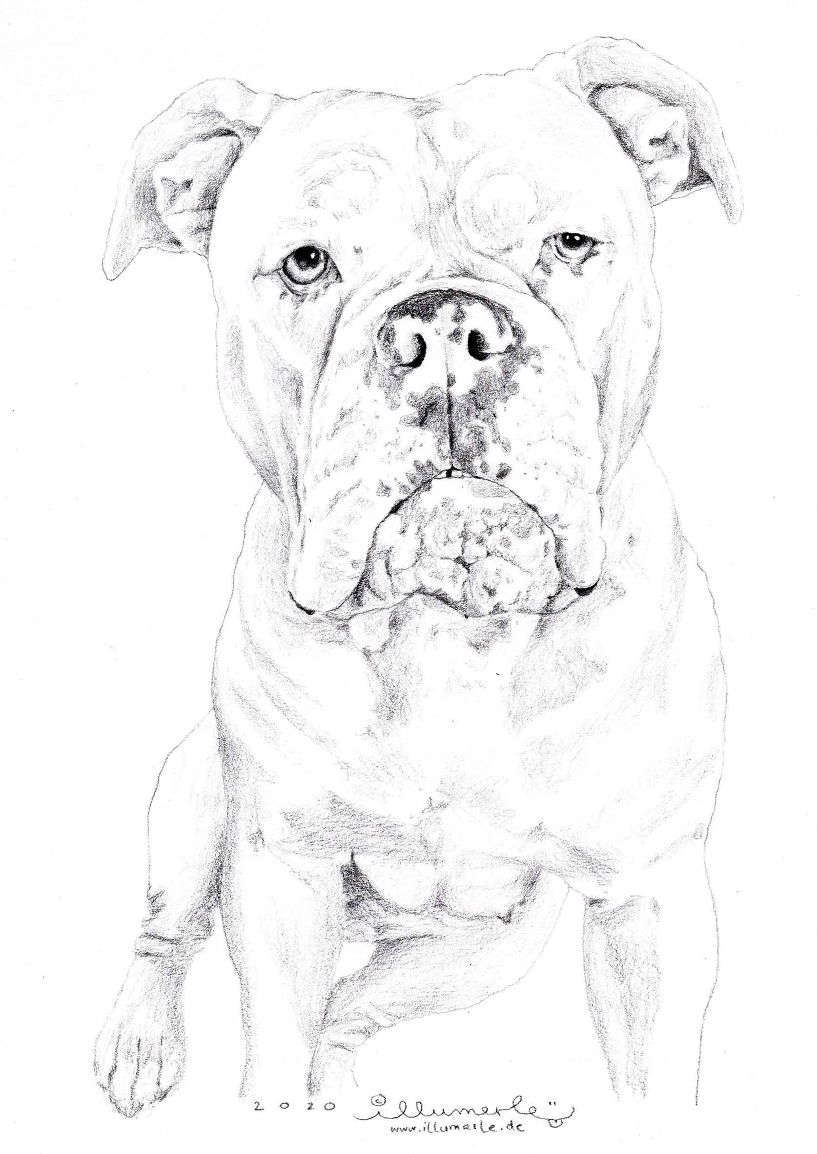 hund-posrträt-detail-sw-2