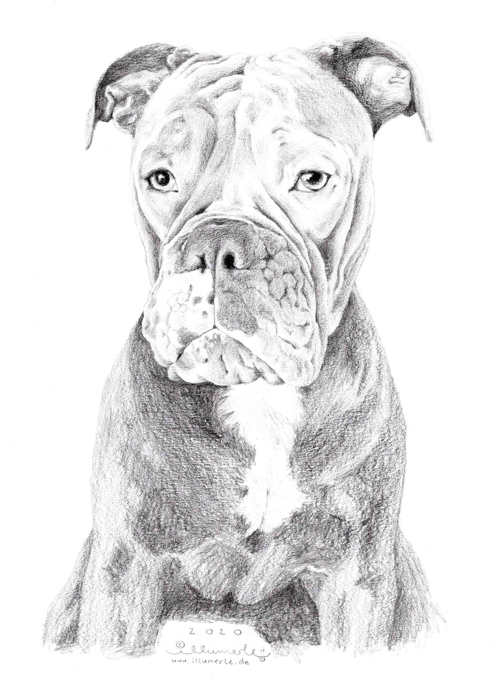 hund-posrträt-detail-sw