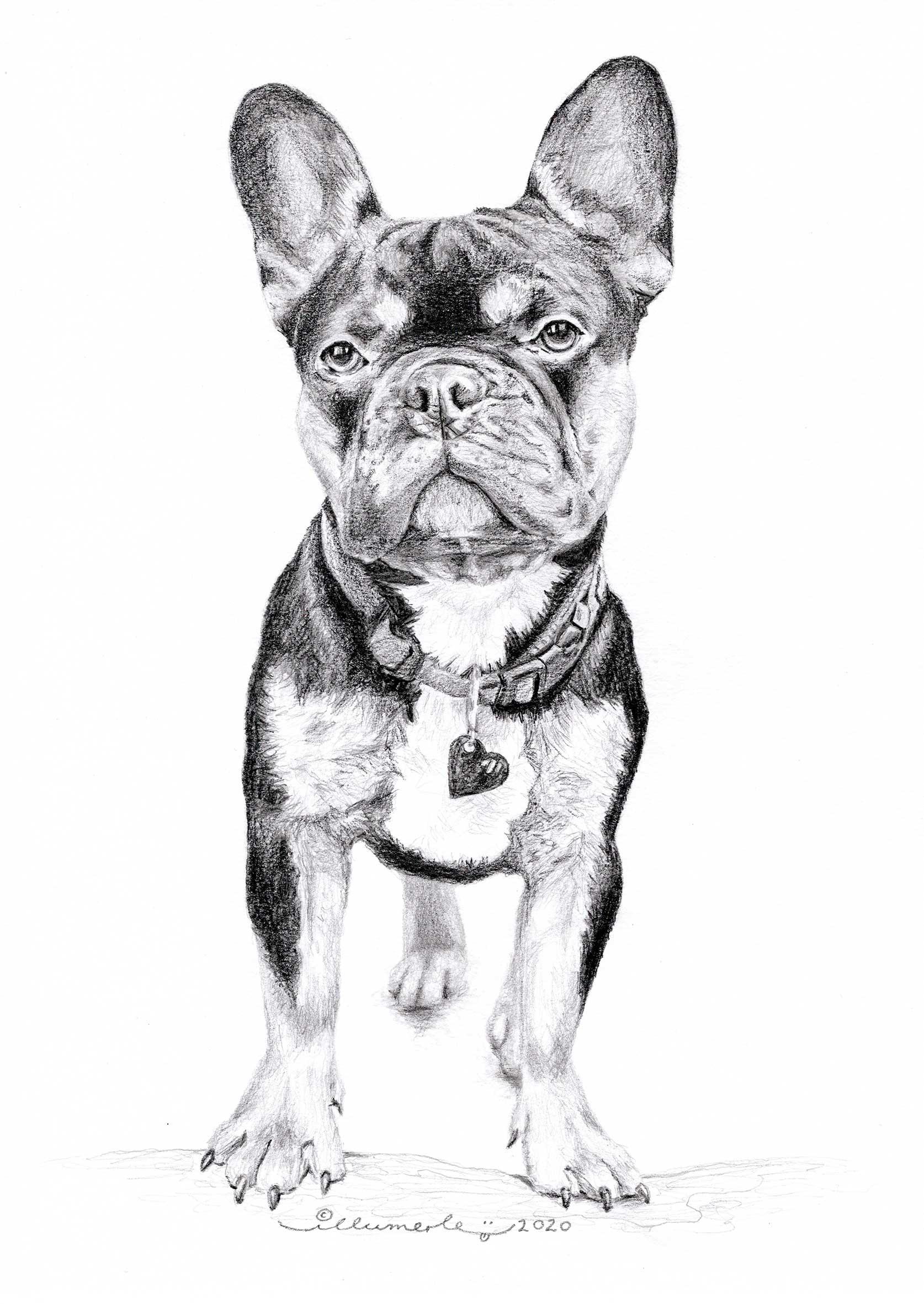 porträt-detail-peanut-hundeportrait